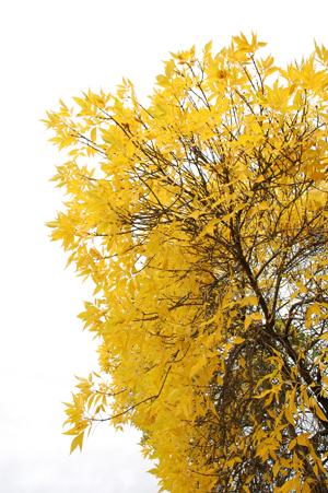 http://www.dreamstime.com/stock-images-autumn-landscape-image10942544