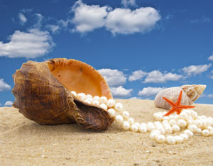 http://www.dreamstime.com/royalty-free-stock-photos-cockleshell-pearl-necklace-image11130178