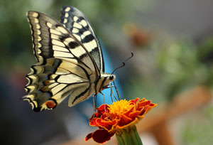 http://www.dreamstime.com/stock-photo-butterfly-image10934620