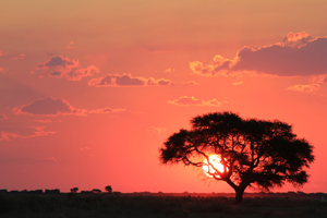 http://www.dreamstime.com/royalty-free-stock-photography-african-sunset-observing-burning-planet-afar-over-plains-camelthorn-tree-foreground-photo-taken-game-ranch-image30436367